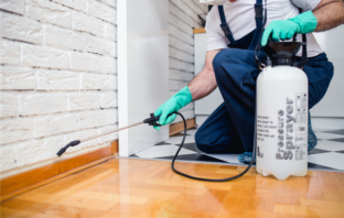 7 pest prevention maintenance tips