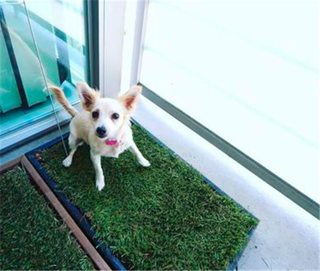 How to solve the pet pee issue in a high-rise apartment building