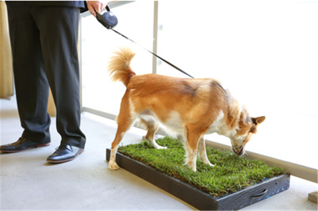 How to solve pet pee issues in a high-rise apartment building