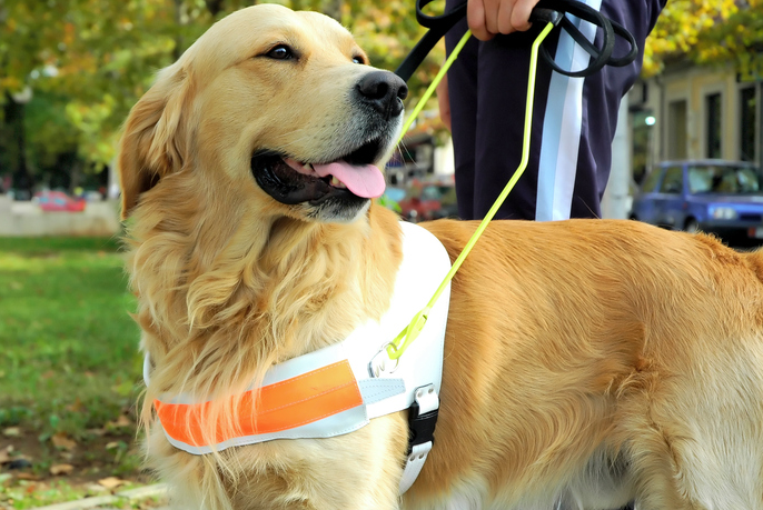 Are You Confused By Requests For Service, Emotional Support And Assistance Animals?