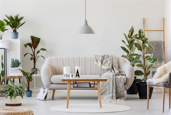 How to Attract Eco-Conscious Tenants With Organic Decor Elements