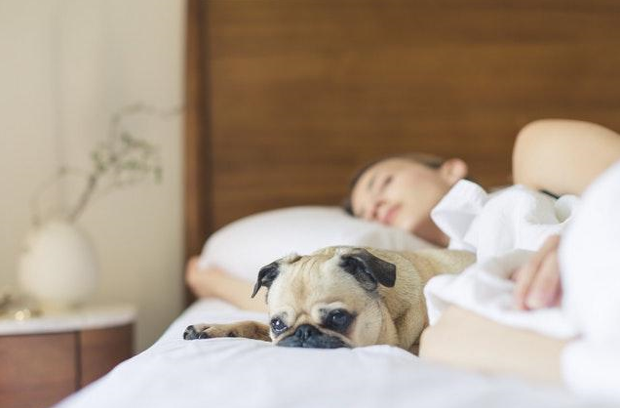 The Pros And Cons Of Having A Pet Friendly Apartment Or Rental