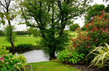6 Ways To Save Water With The Right Landscaping At Your Property
