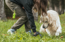 The Scoop On How Pet DNA Testing Fixes Your Apartment Poop Problem