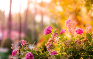 5 Easy DIY Projects That Can Add Value to Your Rental Property include landscaping flowers and gardens