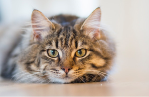 HUD Charges Landlords with Discrimination for Not Allowing Assistance Cat