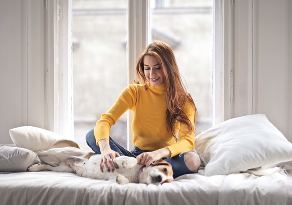 Pet damage insurance can better protect Your Pet-Friendly Rental Properties