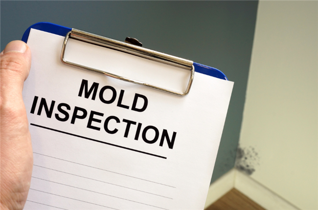 5 Steps To Detect Mold Problems in Your Properties